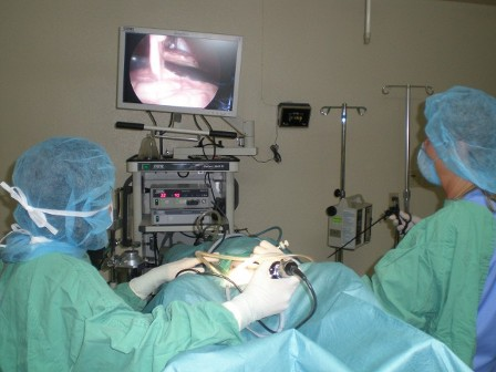 chandrama laproscopy-surgery services